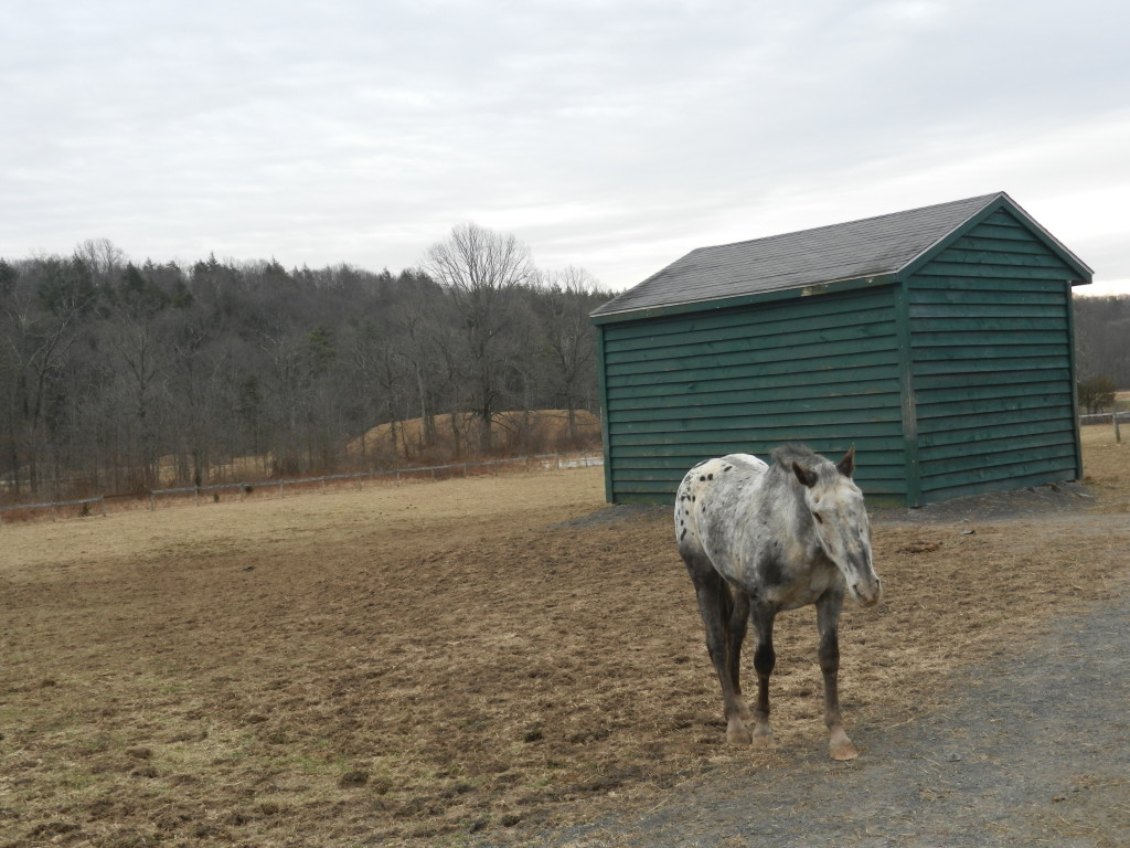 Vegan Travel - My Weekend at The Catskill Animal Sanctuary and the